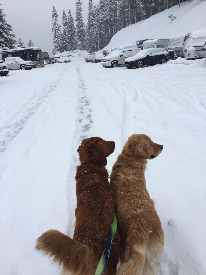 VAIL's Takeover Of Stevens Pass And How It Is Affecting Their Loyal Customers